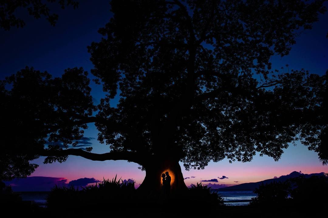 large tree at olowalu plantation house