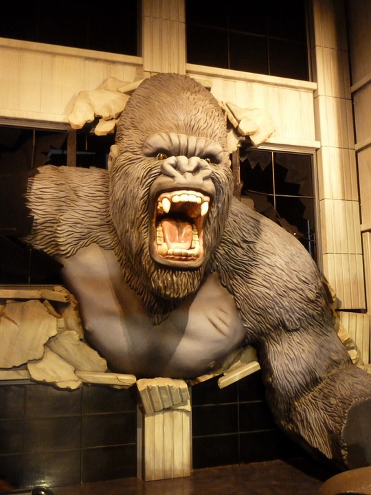 La ira reflejada en la furia de un gorila
