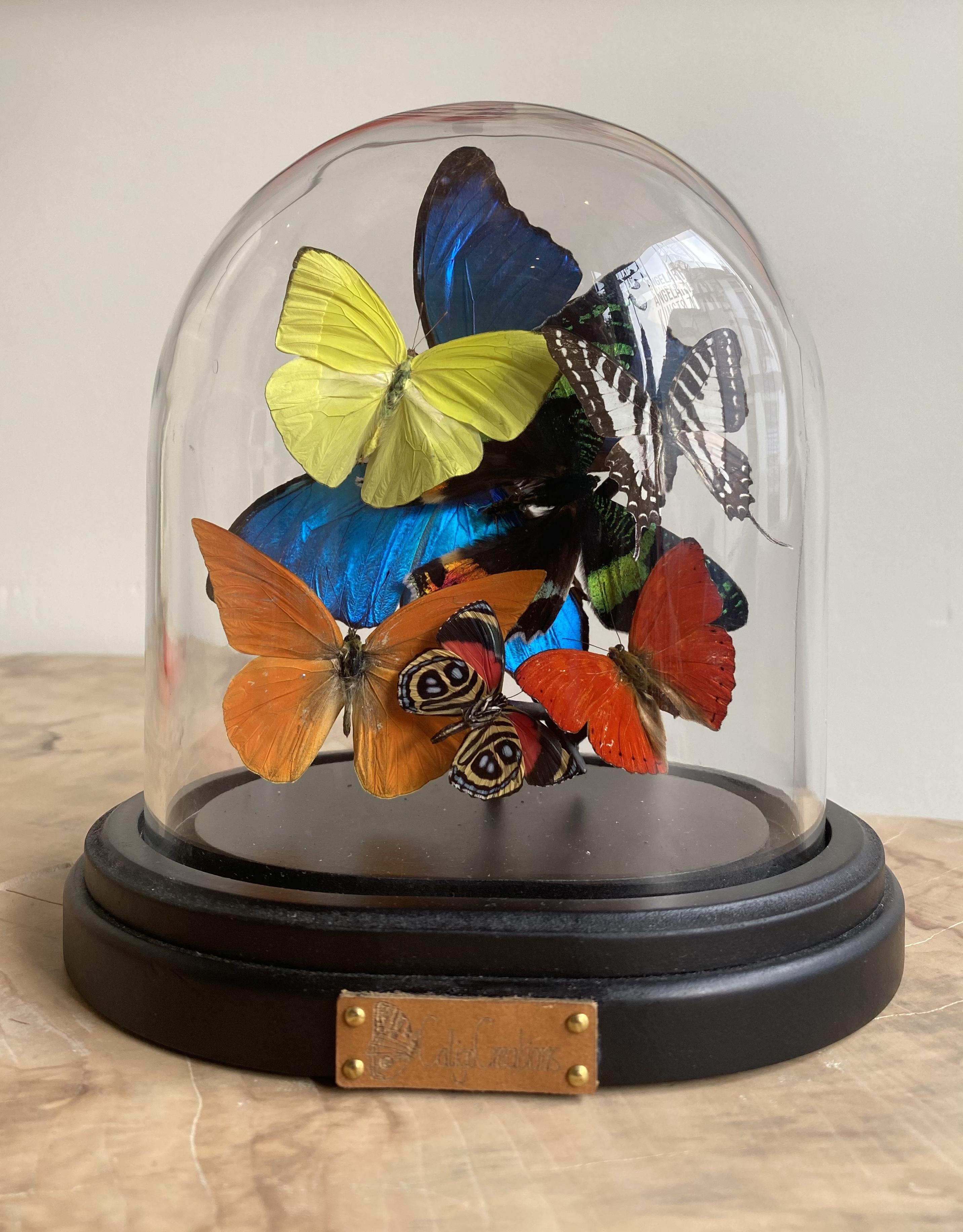 vlinder stolp met tropische vlinders