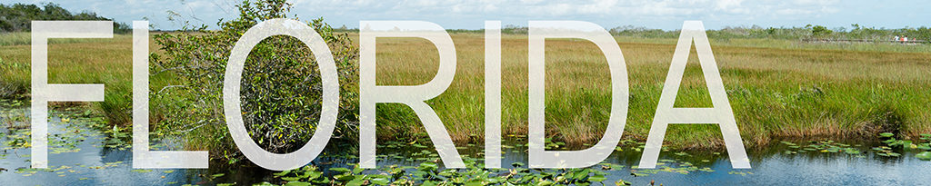 a banner linking to florida blog posts