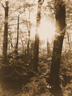 DSC04604 Sugar Forest 1