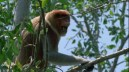 cropped-e284a2angelcraft-crown-geo-science-and-aerospace-foundation-ageo-proboscis-monkey-warning-signe.jpg
