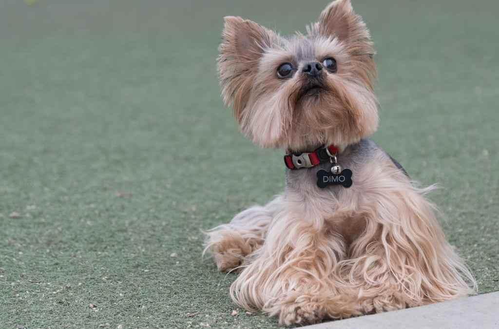 The Joy of Dog Parks