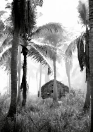 03_palm