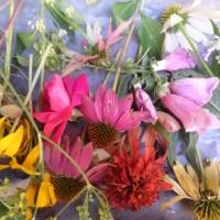 drying summer flowers