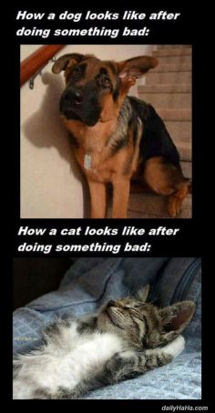 cats_vs_dogs 3