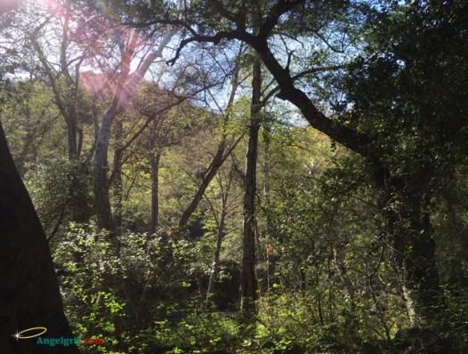 20140317-sunlight-thru-trees