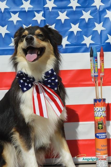 20140704-pets-fireworks