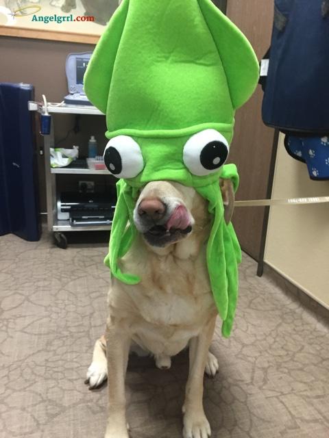 SquidDog
