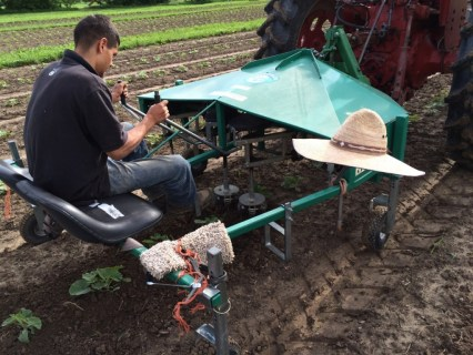 A weeding machine (the power wiggle hoe) helps Victor increase our weeding efficiency