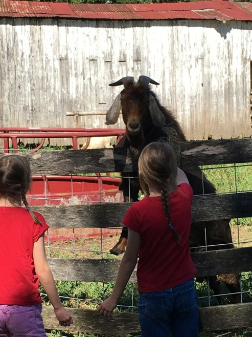Learning Center goat and twin sisters Kaitlyn and Katherine of Rudolf Steiner scholar Joseph Haas
