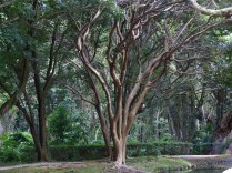 Byodo-In grounds