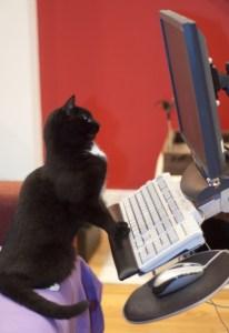 chat sur ordi