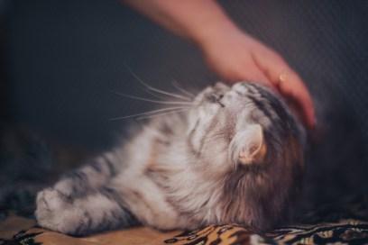 soin énergétique chat