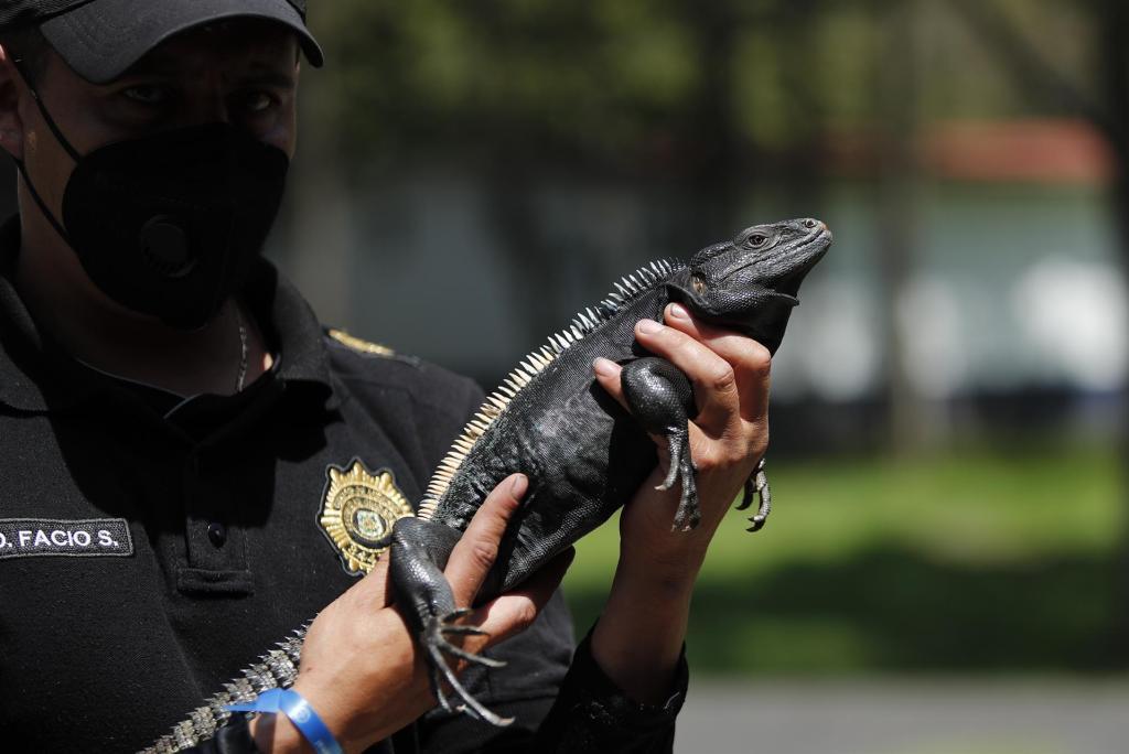 Brigada mexicana recuerda que violencia contra animales escala a otros tipos