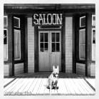 My saloon-loving dog.
