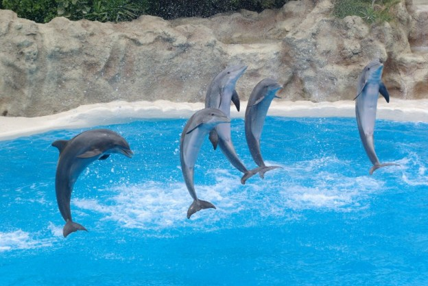 dancing with dolphins spirit animal healing