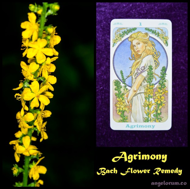 Agrimony Bach Flower Remedy Oracle Card