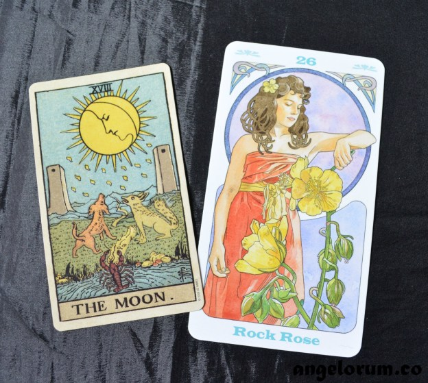 Rock Rose Bach Flower Remedy and the Tarot Moon Card