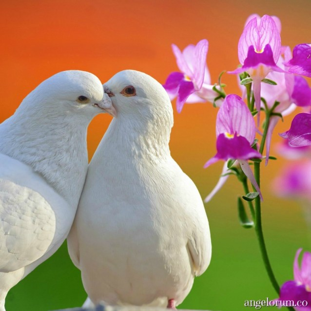 Reviving the love dove tarot week ahead love and romance forecasts here on Angelorum. www.lovedovetarot.com