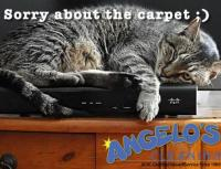 Should I Clean My Carpets During Winter? -ANGELOS CLEANING