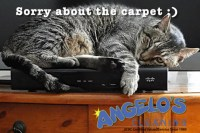 How to Clean Cat Urine out of a Carpet