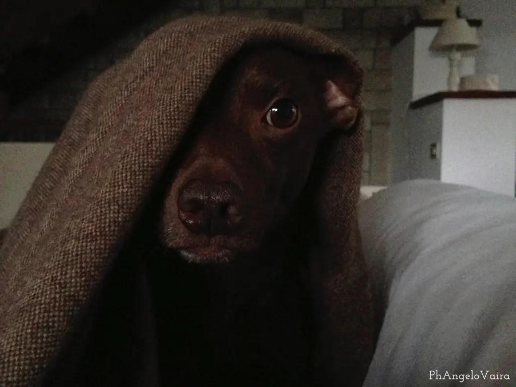 Giusto Tenere il Cane sul Divano o sul Letto