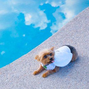 pooldogw