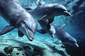 dolphins-pic_dolphinartgallery-com