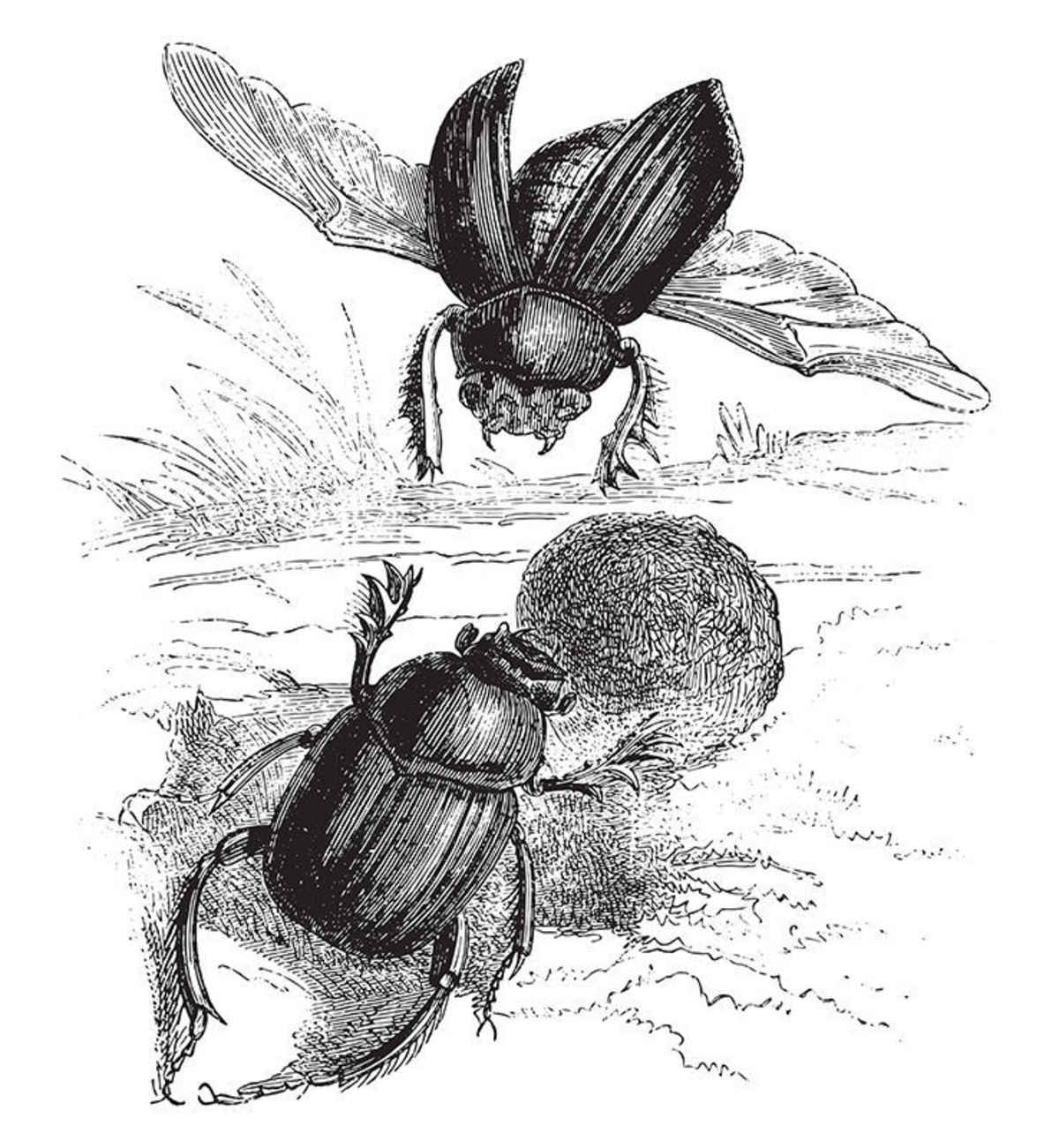 The Sacred Beetle: Jean-Henri Fabré's 'Book of Insects