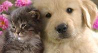 ~動物の写真に癒されたなら~ 私を幸せにするアイテム