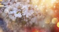 女性の幸せを叶えてくれる桜の女神「コノハナサクヤヒメ」って?