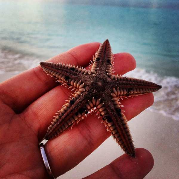 Treasure Cay is full of treasures