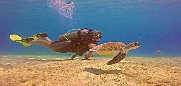 Diving Bonaire - definitely, definitely a top dive destination