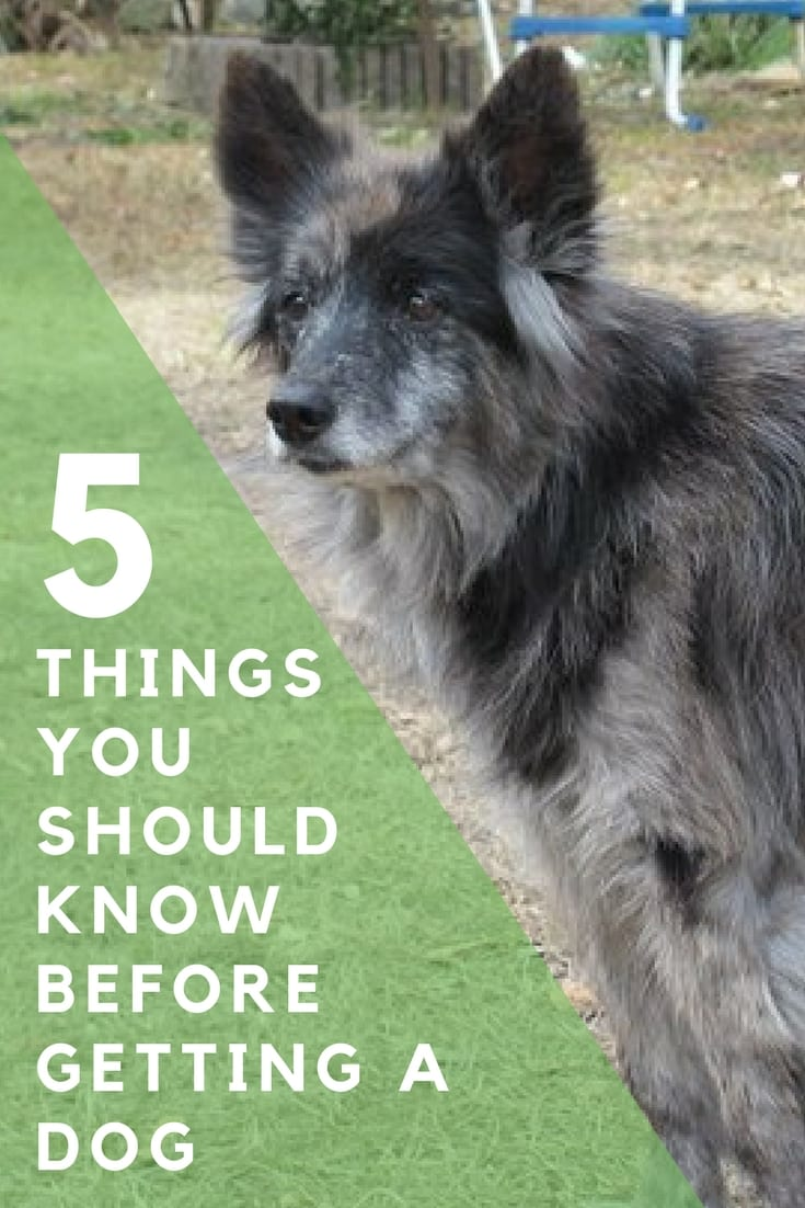 5 Things to consider before getting a dog