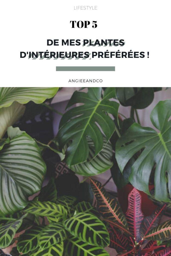 Top 5 de mes plantes d'intérieures préférées !
