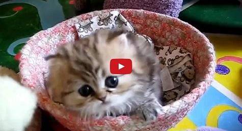 Cute Kitten, Kitty, Cute, Aww, Adorable