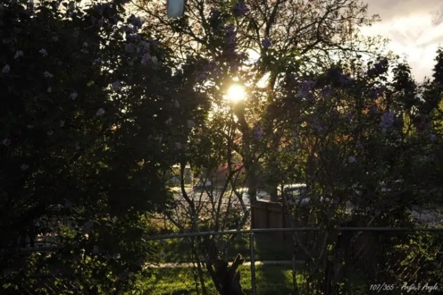 Day 107 - Sun through Trees