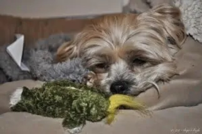 Day 98 - Roxy with Froggy