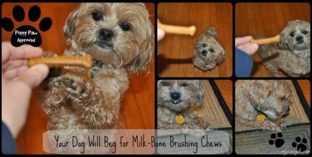 Your Dog Will Beg for Milk-Bone Brushing Chews