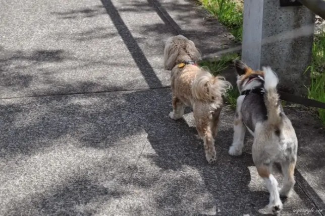 Roxy & Sam Walkies (2)
