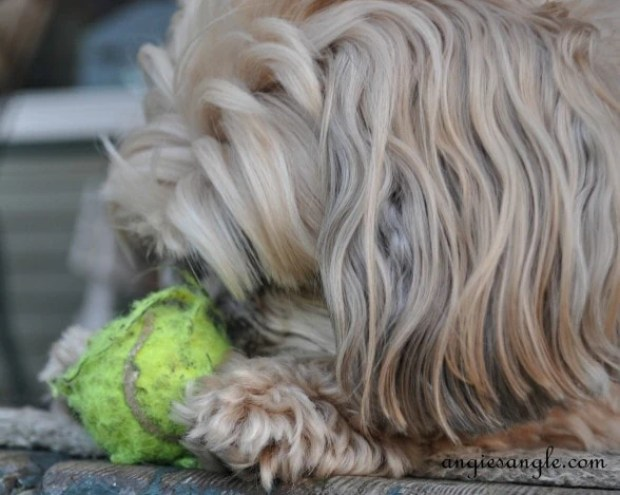 Ball Skilled Puppy - Wordless Wednesday - Roxy Batting the Ball (10)