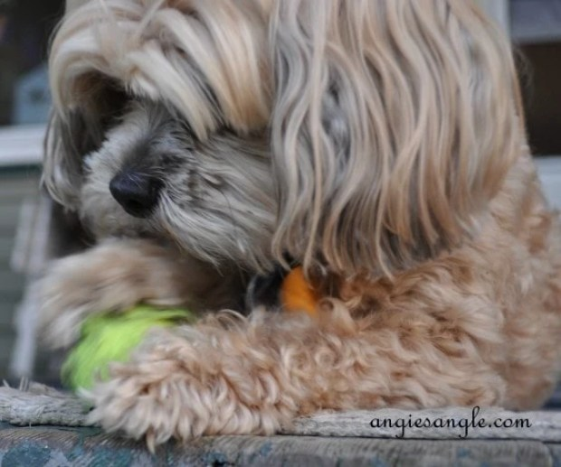 Ball Skilled Puppy - Wordless Wednesday - Roxy Batting the Ball (8)