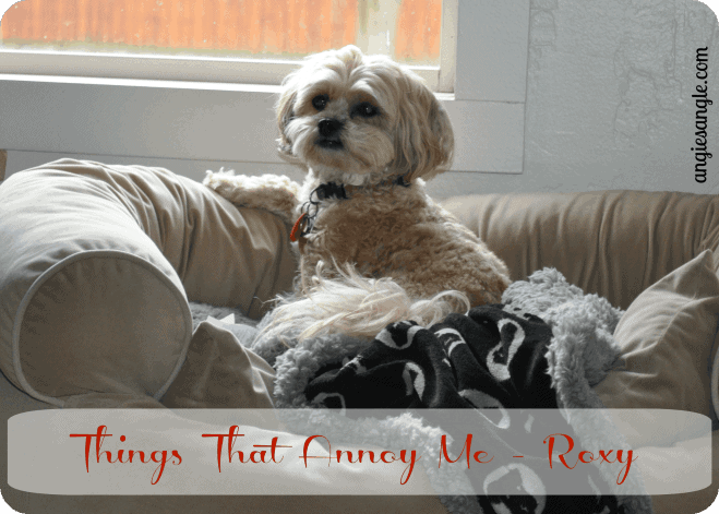 3 Things That Annoy Me – Roxy