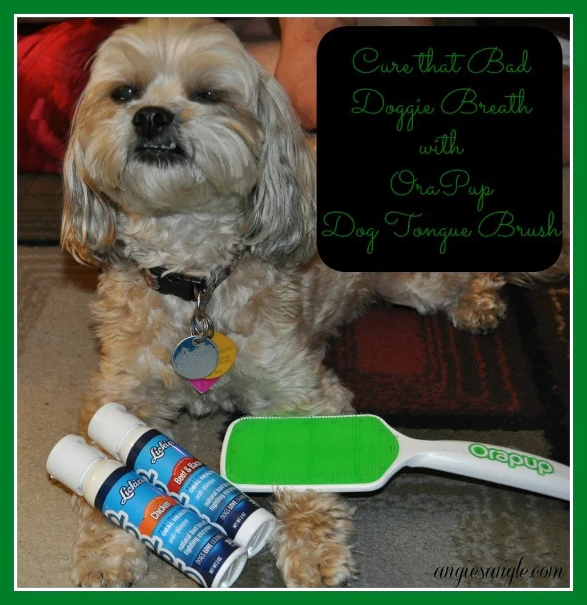 5 Simple Ways to Take Care of Your Dog #DogGoneBreath #CollectiveBias