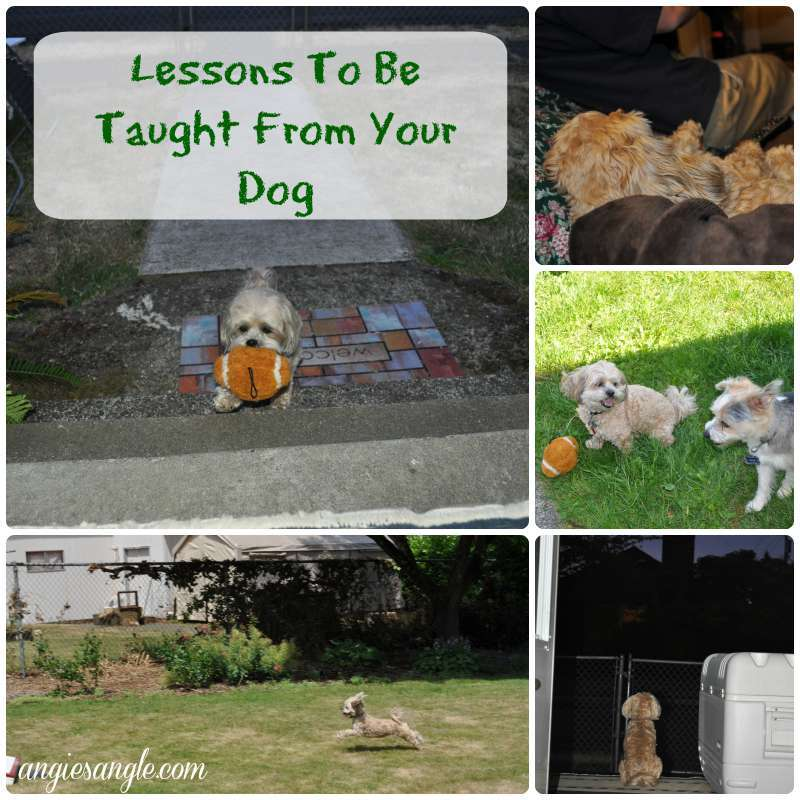 Lessons To Be Taught From Your Dog
