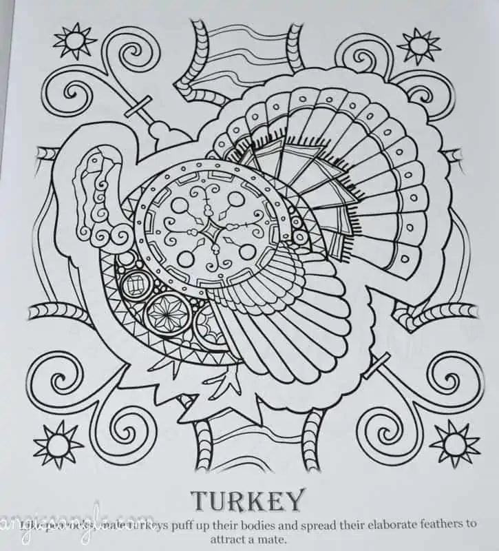 Amazing Birds - Adult Coloring Book - Turkey