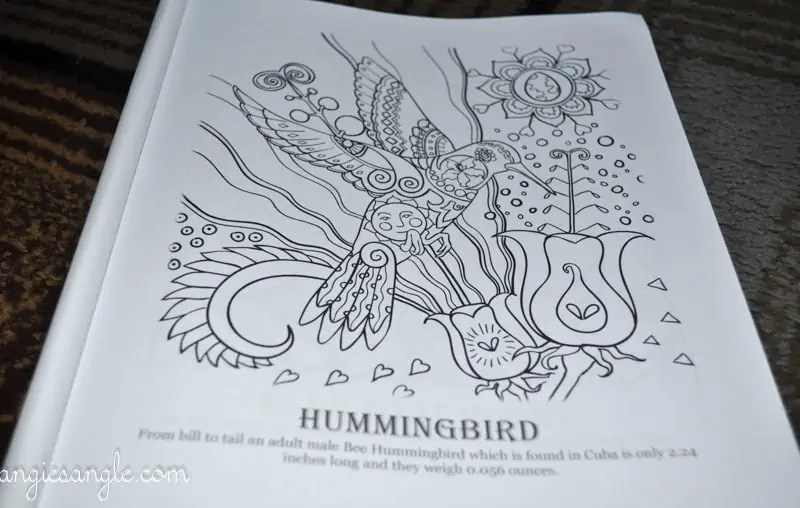 Amazing Birds - Adult Coloring Book - Hummingbird