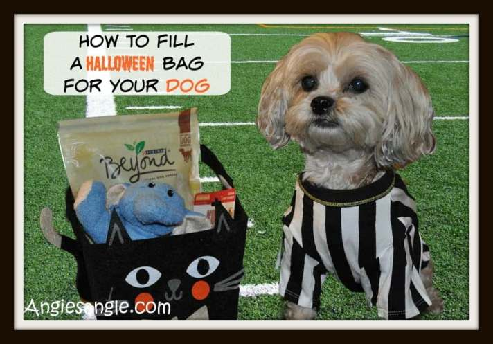 How To Fill a Halloween Bag For Your Dog - Hero