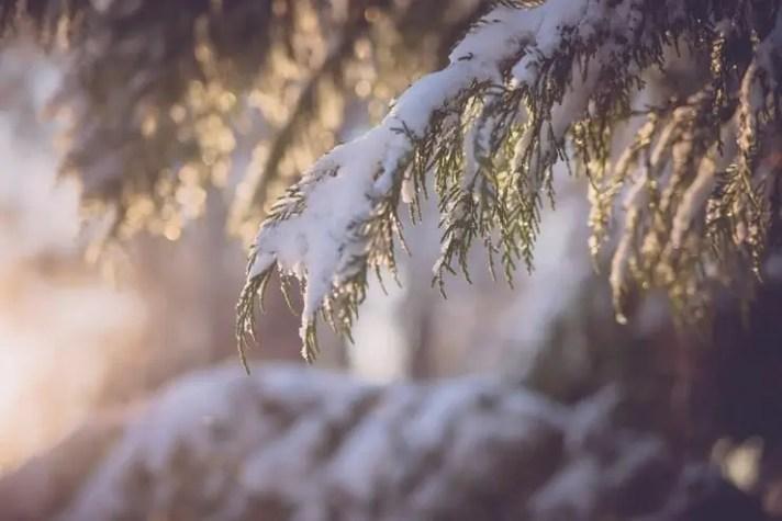 cold-740x494-favorite